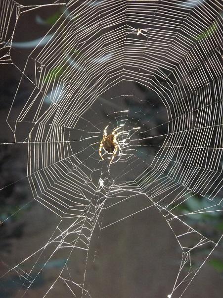 toile d'araignée Autiste-Artiste Karim TATAI Strasbourg