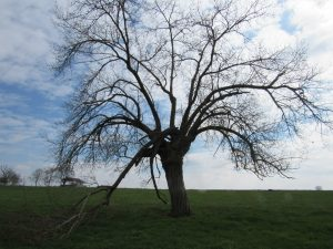 arbre-4-St-Loup-Karim-TATAI-Strasbourg