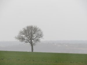 arbre-allier-mars-2016-Karim-TATAI-Strasbourg