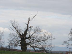 arbre-cassé-Karim-TATAI-Strasbourg