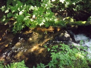 ruisseau-Karim-TATAI-Strasbourg