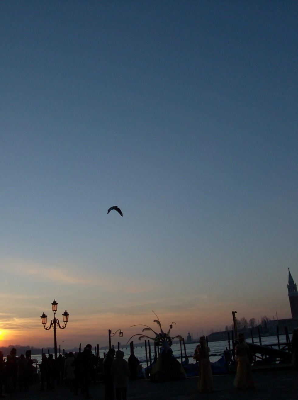 pigeon ciel matin Regard brut sur Venise Karim TATAI Strasbourg