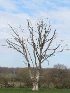 arbre-5-St-Loup-Karim-Tatai-Strasbourg