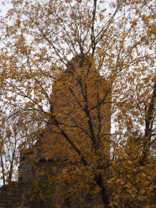 arbre en automne 10 Karim TATAI Strasbourg