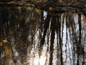 reflet-automne-Karim-TATAI-Strasbourg